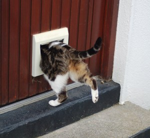 Cat using a cat flap