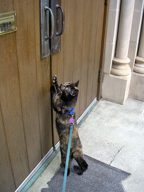 Bon A Picture Of A Cat Scratching A Brown Wooden Door
