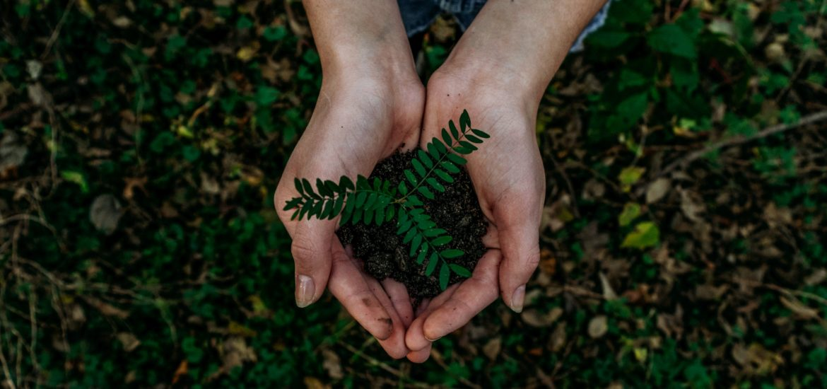 Photograph of hands cupping a plant and soil